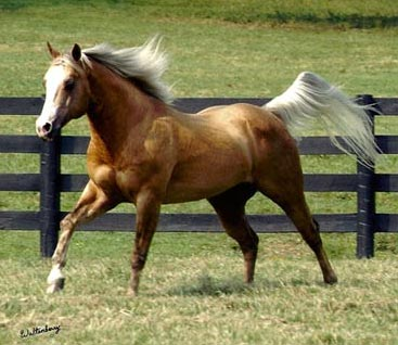 Nu Chex To Cash resides at Hilldale Farm.